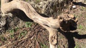 Ramifique na floresta vídeos de arquivo
