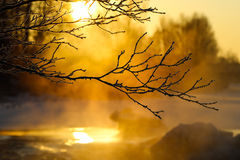 Ramifique na luz solar do inverno Imagem de Stock