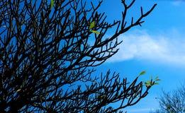 Ramifique no céu azul Fotos de Stock Royalty Free