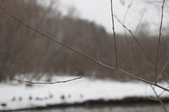 Ramifique no inverno Imagens de Stock