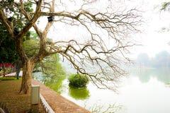Ramifique no lago Hoan Kiem Imagem de Stock
