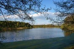 Ramifique sobre el lago con la lenteja de agua Foto de archivo libre de regalías