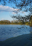 Ramifique sobre el lago con la lenteja de agua Foto de archivo