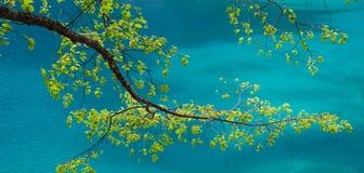 Ramifique sobre o lago JiuZhaiGou Imagem de Stock Royalty Free