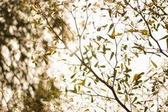 Ramifique y váyase en otoño Fotografía de archivo libre de regalías