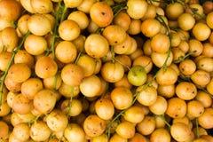 Ramiflora de Baccaurea Foto de Stock Royalty Free