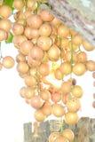 Ramiflora de Baccaurea imagenes de archivo