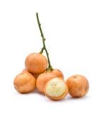 Ramiflora de Mafai ou de Baccaurea Imagens de Stock Royalty Free