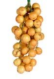 Ramiflora di Baccaurea o di Mafai isolato su fondo bianco Fotografia Stock Libera da Diritti