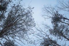 Ramita con las hojas en el bosque del invierno Imágenes de archivo libres de regalías