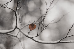 Ramita con las hojas en el bosque del invierno Fotografía de archivo