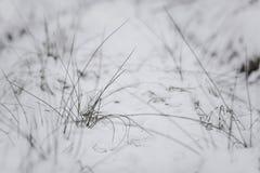 Ramita con las hojas en el bosque del invierno Imagen de archivo libre de regalías