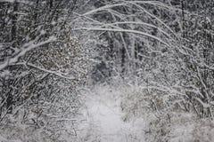Ramita con las hojas en el bosque del invierno Imagenes de archivo