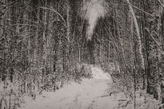 Ramita con las hojas en el bosque del invierno Foto de archivo
