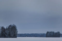 Ramita con las hojas en el bosque del invierno Foto de archivo libre de regalías