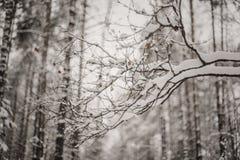 Ramita con las hojas en el bosque del invierno Fotos de archivo