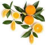 Ramita con las naranjas Sobre la visión Imagen de archivo