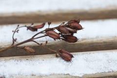 Ramita con las semillas, las flores y las frutas secadas fotografía de archivo libre de regalías