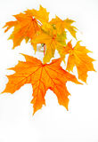 Ramita de Autumn Leaves en un florero Fotografía de archivo libre de regalías
