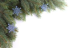 Ramita de la Navidad Foto de archivo libre de regalías