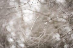 Ramita del árbol con escarcha Foto de archivo libre de regalías