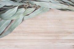 Ramita del eucalipto en una tabla de madera imagen de archivo