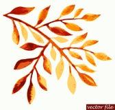 Ramita del otoño de la acuarela Foto de archivo libre de regalías