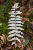 Ramita del otoño del helecho de madera imagen de archivo libre de regalías