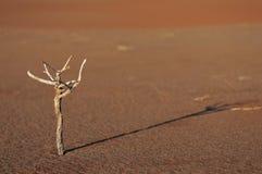 Ramita en el namib Fotografía de archivo libre de regalías