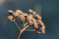 Ramita macra de la planta Imagen de archivo