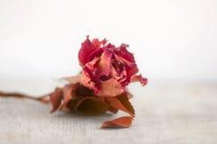 Ramita muerta vieja con la flor Foto de archivo libre de regalías
