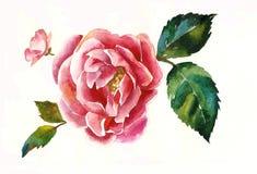 Ramita rosada del dogrose con la acuarela color de rosa del poriginal de la hoja Imágenes de archivo libres de regalías