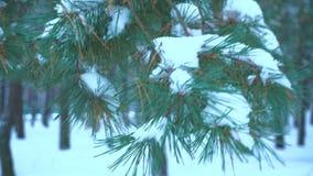 Ramita verde del ABETO cubierta con nieve almacen de metraje de vídeo