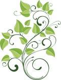 Ramita verde del resorte Foto de archivo libre de regalías