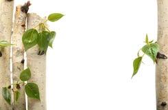 Ramita y blanco aislado marco verde de la hoja Fotos de archivo