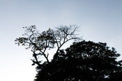 Ramita y hoja en el árbol Imagen de archivo