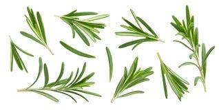 Ramita y hojas de Rosemary aisladas en el fondo blanco con la trayectoria de recortes, colección imagen de archivo libre de regalías