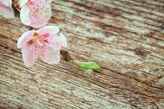 Ramitas con las flores de la cereza Imágenes de archivo libres de regalías