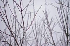Ramitas congeladas Imagenes de archivo
