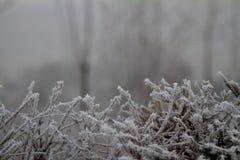 Ramitas congeladas en invierno Fotos de archivo