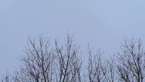 Ramitas de balanceo y cielo gris, tiempo ventoso del invierno, espacio libre para el texto, 1920x1080 metrajes