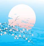 Ramitas de la cereza en la floración Fotos de archivo libres de regalías