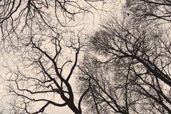 Ramitas de las ramas de árbol en invierno fotografía de archivo libre de regalías