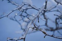 Ramitas de los azules claros Imagenes de archivo
