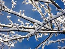 Ramitas del invierno Foto de archivo libre de regalías