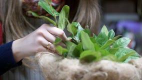 Ramitas del verde del parte movible del florista con las hojas en un florero que hace floral almacen de video