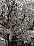 ramitas embaladas en hielo después de una noche de la lluvia sobrefundida Foto de archivo libre de regalías
