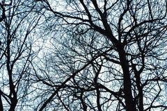 Ramitas en invierno - bosque de las ramas de árbol foto de archivo