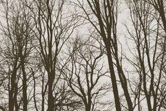 Ramitas en invierno - bosque de las ramas de ?rbol fotos de archivo libres de regalías