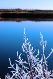 Ramitas heladas en nieve contra el cielo azul y el río fríos Imagenes de archivo